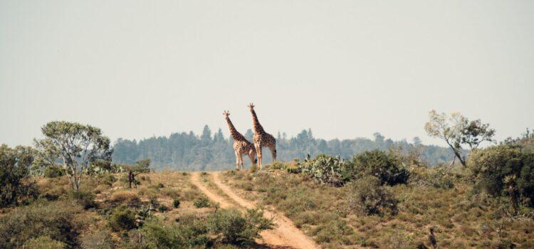 Reiseguide: Bryllupsreise til Afrika